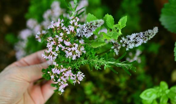 Gartenpflanzen für Schmetterlinge