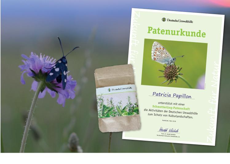 Urkunde und Samentütchen für Schmetterlingspaten