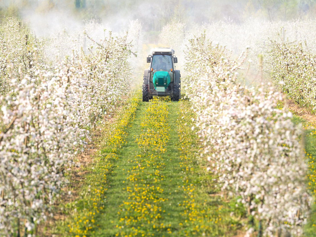 Traktor versprüht Isektizide auf einem Apfelfeld.