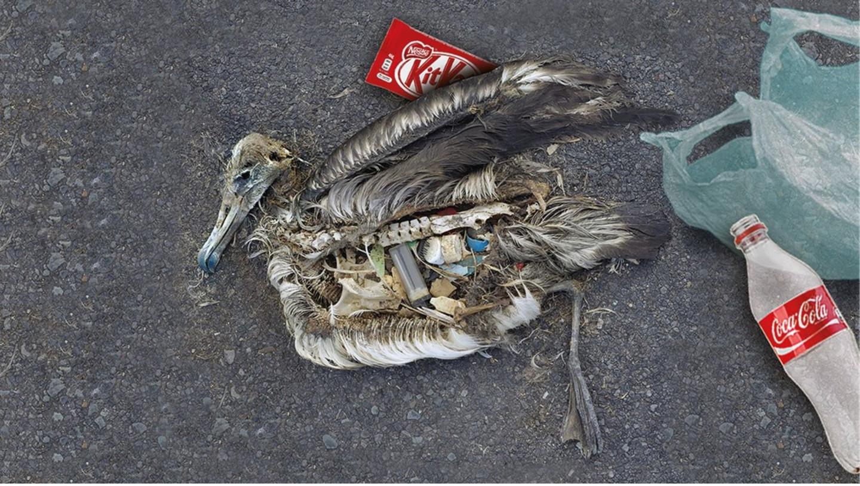 Ja, ich spende für den Kampf gegen die Plastikflut: