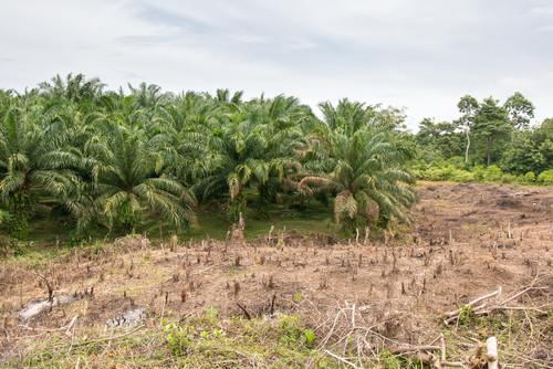 Palmöl-Anteil im Diesel steigt weiter an – Deutsche Umwelthilfe fordert nationalen Sofortausstieg zum Schutz von Klima und Artenvielfalt