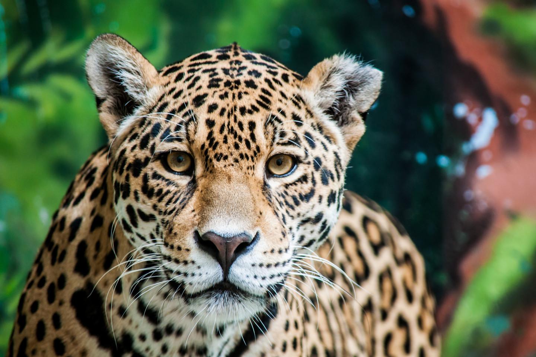 Ja, ich spende für den Schutz von Brasiliens Wäldern: