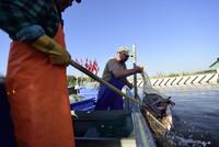 Fischfang auf dem Stettiner Haff