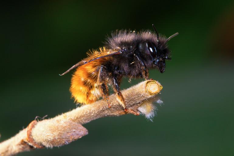 teaser Bienen und Bauern retten!