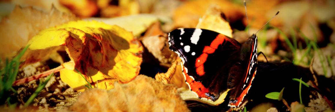 Deutsche Umwelthilfe - Schmetterling auf Obst