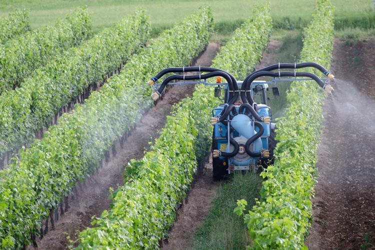 Ein Traktor versprüht Pestizide auf einem Weinfeld.
